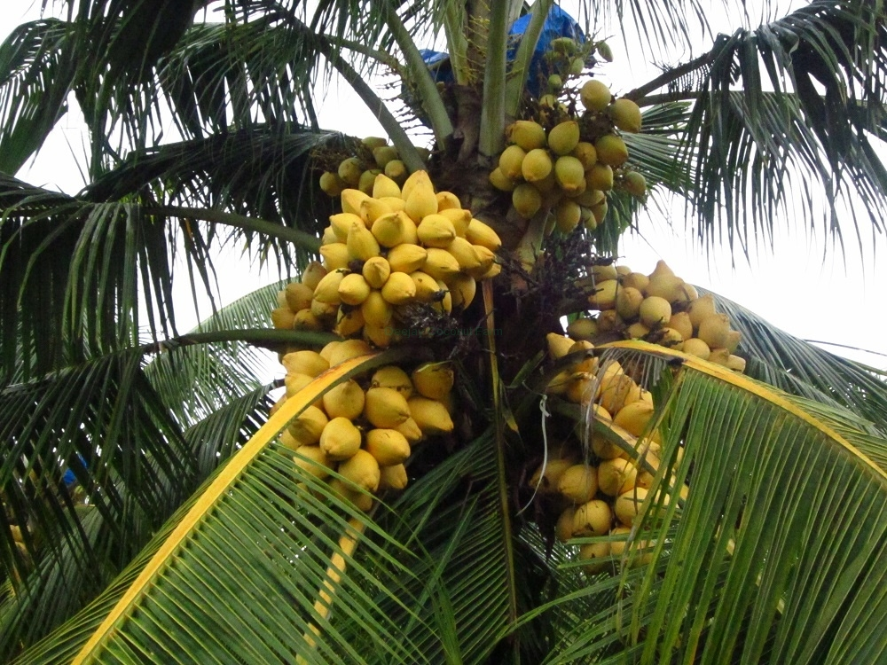 mother-palm-1