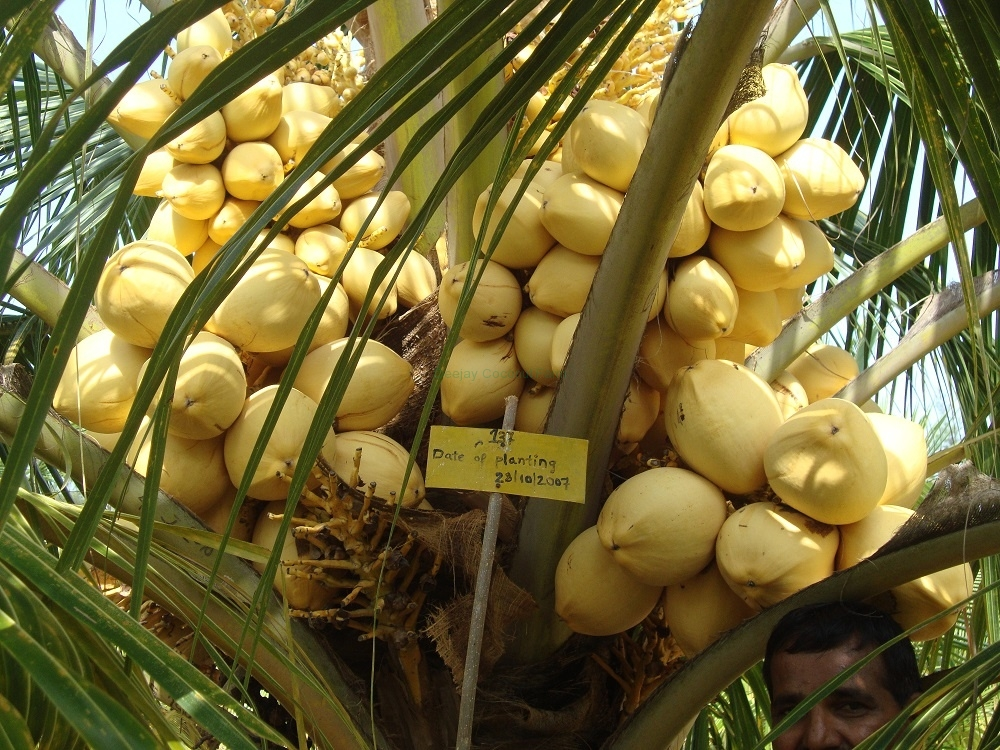 mother-palm-2
