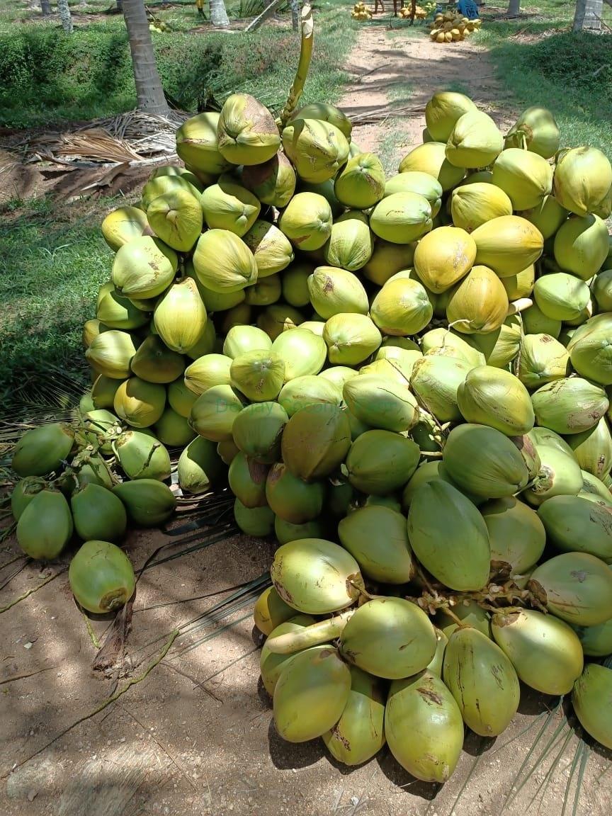 Deejay-Nuts-TN-3