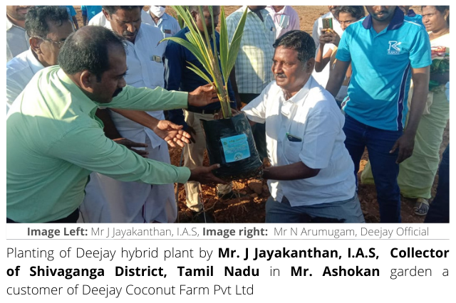 Sivaganga Collector planting Deejay Hybrid plant at Deejay customer's garden